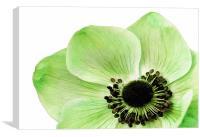 Green Anemone, Canvas Print