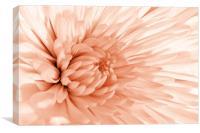 Peach Mum, Canvas Print