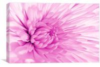 Pink Mum, Canvas Print
