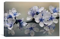 Blue Blossom, Canvas Print