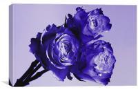 Blue Rose Trio, Canvas Print