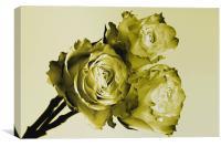 Gold Rose Trio, Canvas Print