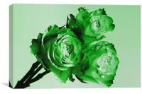 Green Rose Trio, Canvas Print