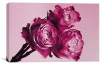 Pink Rose Trio, Canvas Print