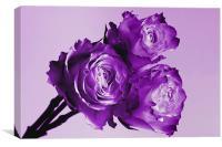 Purple Rose Trio, Canvas Print
