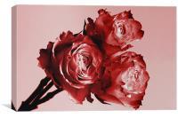 Red Rose Trio, Canvas Print