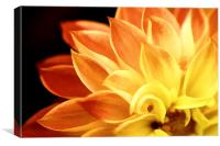 Dahlia Flames, Canvas Print