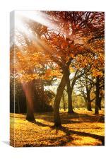 Autumn Sunshine, Canvas Print