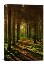 Golden Pines, Canvas Print