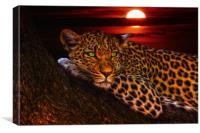 Resting Leopard Sunset, Canvas Print