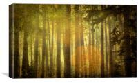 Deep In Black Wood, Canvas Print