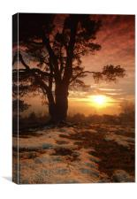 Sunset on Leith Hill, Canvas Print