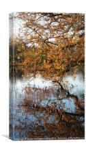 Autumn colours over a lake