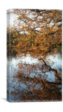 Autumn colours over a lake, Canvas Print