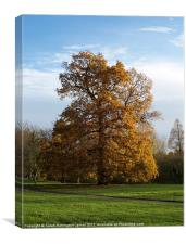 Ancient oak tree in Autumn, Canvas Print