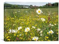 Wildflower summer meadow, Canvas Print