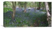 Ancient bluebell woodland, Canvas Print