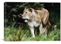 Lioness, Canvas Print