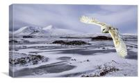 Owl flying over Rannoch Moor, Canvas Print