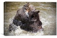 Brown Bears, Canvas Print