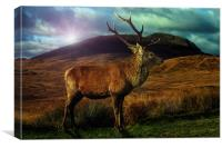 Sunset Stag, Canvas Print