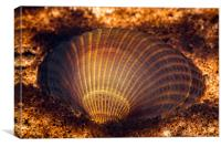 Clam shell, Canvas Print