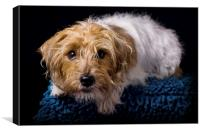 Little Terrier, Canvas Print