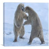 Polar bears, Canvas Print