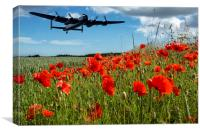 Flying over poppies, Canvas Print