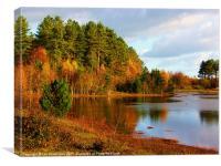 Autumn at Newborough Forest, Canvas Print