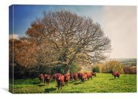Cows, Canvas Print