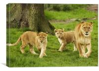 Lioness and Cubs, Canvas Print