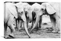 A Herd of Elephants, Canvas Print