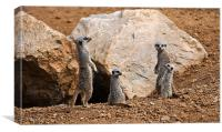 Meerkat Family, Canvas Print
