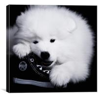 Samoyed 1, Canvas Print