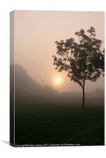 Misty tree, Canvas Print