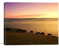 Cattle grazing on Lough Down, Canvas Print