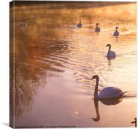 Swans Mapledurham, Canvas Print