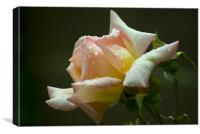 A Rose, Canvas Print