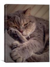 sweet kitty cat