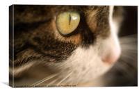 Cat's Eye, Canvas Print