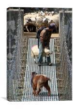 Goats on Suspension Bridge Tikhedhunga, Canvas Print