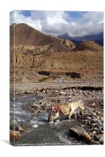 Horse Crossing River near Jomsom, Canvas Print