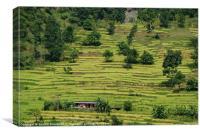 House Amongst Rice Fields near Birethanti, Canvas Print