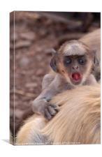 Baby Langur Monkey Ranthambore Fort, Canvas Print
