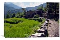 Rice Fields by the Path to Ghorepani, Canvas Print