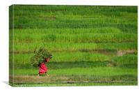 Woman Harvesting Crops near Bhaktapur, Canvas Print