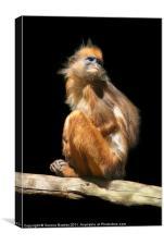 Banded Leaf Monkey, Canvas Print