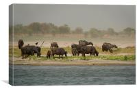 Water Buffalo on the Banks of the Ganges, Canvas Print