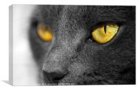 The Golden Eyes of a Cat, Canvas Print